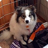 Adopt A Pet :: Tamina - Saskatoon, SK