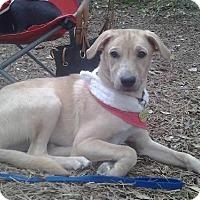 Adopt A Pet :: A309731  Abby - San Antonio, TX