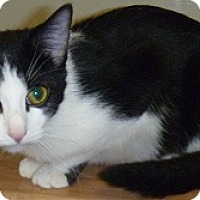 Adopt A Pet :: Jelly Bean - Hamburg, NY