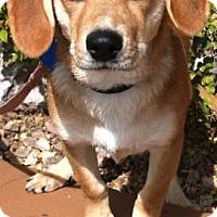 Adopt A Pet :: Tana - Gilbert, AZ