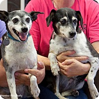 Adopt A Pet :: Thelma and Louise - Marietta, GA
