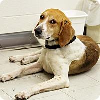 Adopt A Pet :: Otto - Hillsboro, IL