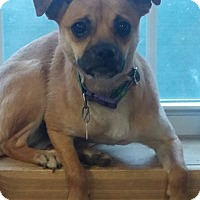 Adopt A Pet :: TIKA - New Windsor, NY