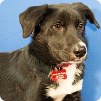 Adopt A Pet :: Duncan - Berkeley Heights, NJ
