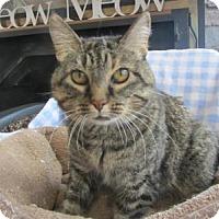 Adopt A Pet :: Idina - Ridgway, CO