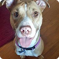 Adopt A Pet :: Tatyana - Troy, MI