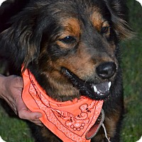 Adopt A Pet :: Mandy - Albemarle, NC