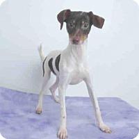 Adopt A Pet :: A569339 - Oroville, CA