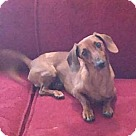 Adopt A Pet :: Franky