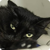 Adopt A Pet :: Minnie Mouse - Herndon, VA