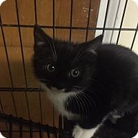 Adopt A Pet :: Rhonda - Forest Hills, NY