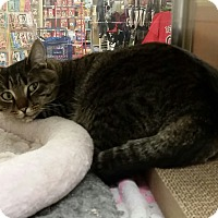 Adopt A Pet :: Sal (in CT) - Manchester, CT