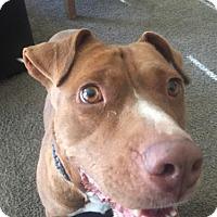 Adopt A Pet :: Maudie Lebowski - Salt Lake City, UT