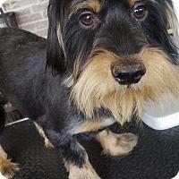 Adopt A Pet :: Brothers Uno & Rowdy - Baileyton, AL