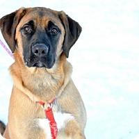 Adopt A Pet :: Josie - Ashland, WI