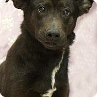 Adopt A Pet :: Charlie - Newnan City, GA