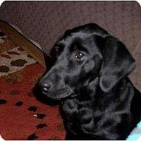 Adopt A Pet :: Nikki - Altmonte Springs, FL