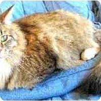 Adopt A Pet :: Tia Maria - Davis, CA