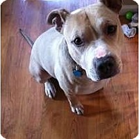 Adopt A Pet :: Tyson-Gentle & Handsome - Sacramento, CA