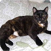 Adopt A Pet :: Marmalade - Mission, BC