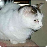Adopt A Pet :: Priscilla - Pascoag, RI