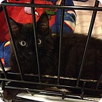 Adopt A Pet :: Patter - Byron Center, MI