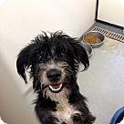 Adopt A Pet :: Polly