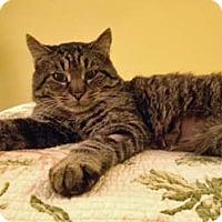 Adopt A Pet :: Fredrico - Merrifield, VA
