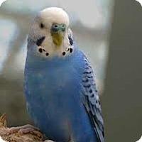 Adopt A Pet :: Goober - Independence, KY