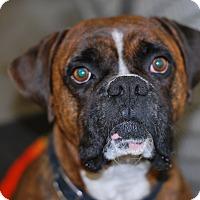Adopt A Pet :: Hank the Tank - Buffalo, WY