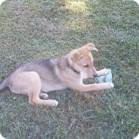 Adopt A Pet :: Piper - Flemington, NJ