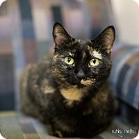 Adopt A Pet :: Star - Manhattan, KS