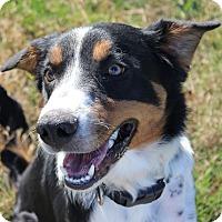 Adopt A Pet :: Hero - Brattleboro, VT