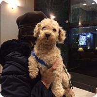 Adopt A Pet :: Dooney - Long Beach, NY