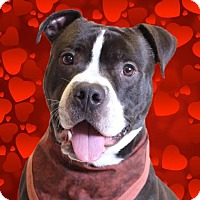 Adopt A Pet :: Howie - Chico, CA