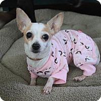 Adopt A Pet :: Lola - Joliet, IL