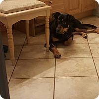 Adopt A Pet :: Gordy - Ogden, UT