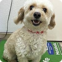 Adopt A Pet :: Adella - Santa Ana, CA