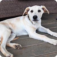 Adopt A Pet :: Manny - Good Hope, GA
