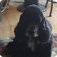 Adopt A Pet :: Scooter A - Parker, CO