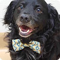 Adopt A Pet :: Elvis - Dublin, CA