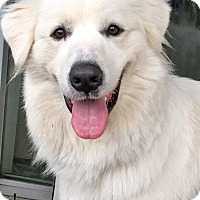 Adopt A Pet :: Angel in CT - new! - Beacon, NY