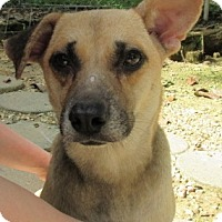 Adopt A Pet :: S967-D Greta - Bay Springs, MS