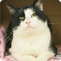 Adopt A Pet :: Tate - East Hartford, CT