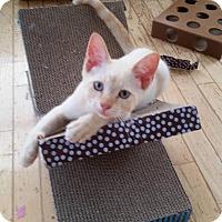 Adopt A Pet :: Lyndon - Evans, WV