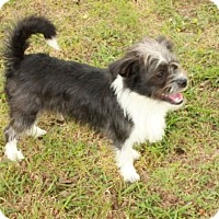 Adopt A Pet :: Will - Norfolk, VA