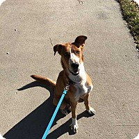 Adopt A Pet :: Lucy - Billings, MT