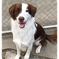 Adopt A Pet :: Garth - Los Alamitos, CA