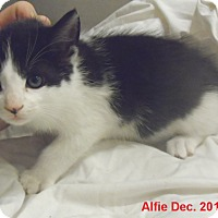 Adopt A Pet :: Alfie - Pensacola, FL
