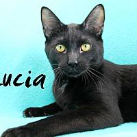 Adopt A Pet :: Lucia - Wichita Falls, TX